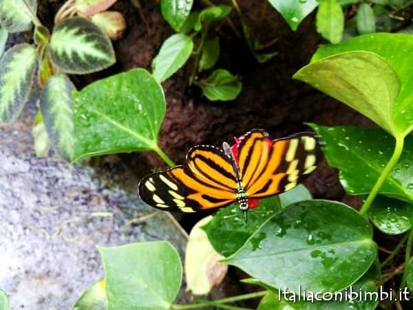 farfalle nella Rain Forest dell'acquario di Copenaghen