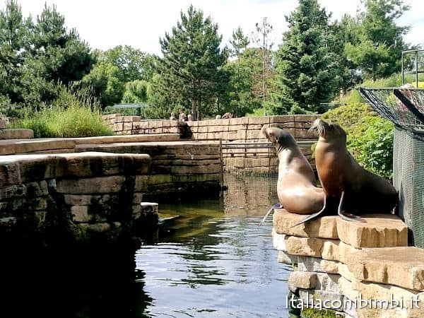 foche allo zoo di Copenaghen