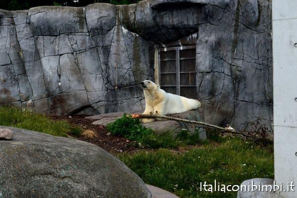 orsi polari allo Zoo di Copenaghen