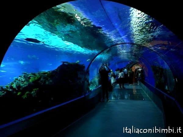 tunnel all'acquario di Copenaghen Den Blaa Planet