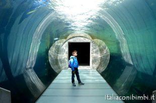 tunnel orsi polari allo Zoo di Copenaghen