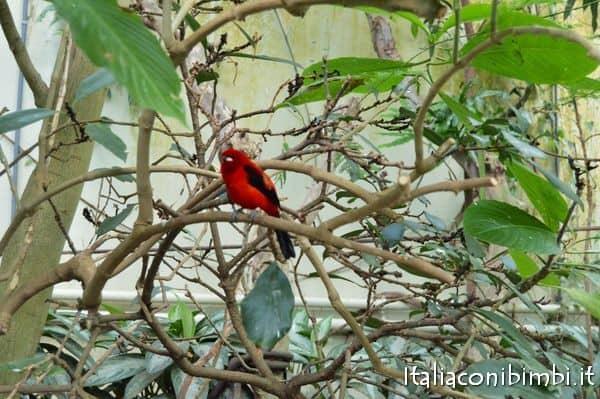 uccellino allo zoo di Copenaghen