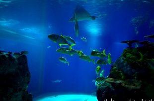 vasca grande acquario di Copenaghen