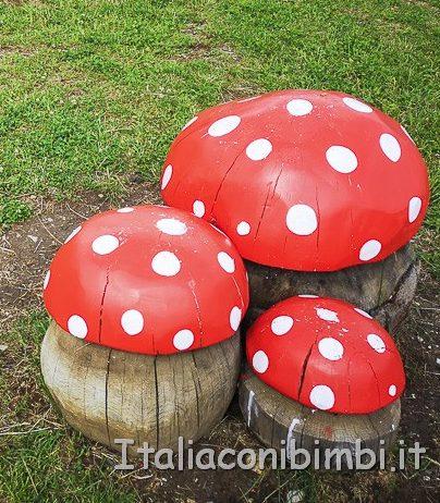 Panaraida- funghi