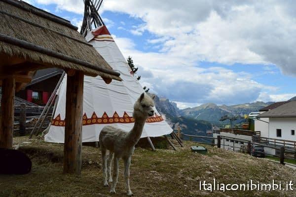 alpaca al Summer Park La Crusc in Val Badia