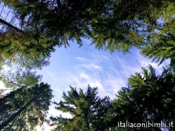 bosco al Mondo Bimbi a Valdaora