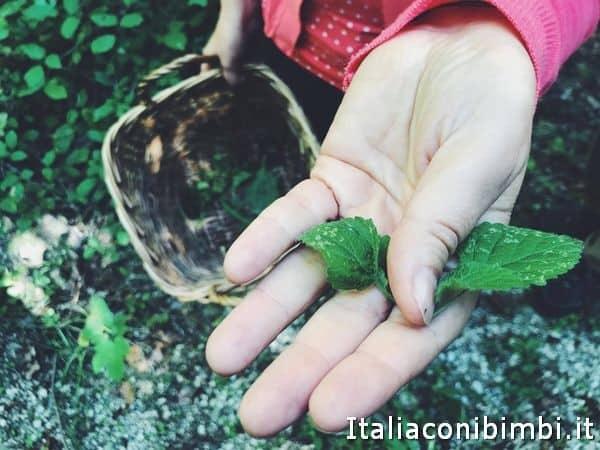 raccolta erbe spontanee all'agriturismo Arcera