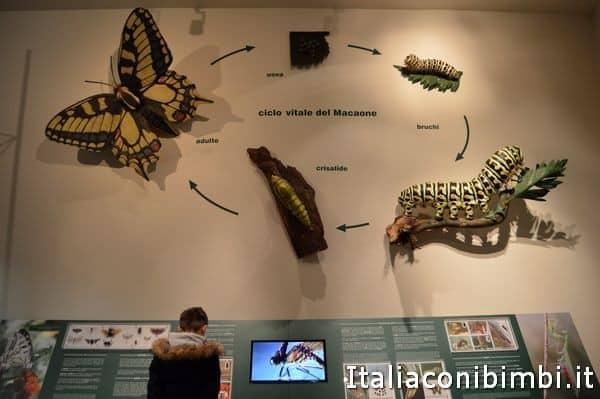 farfalle al museo di scienze naturali di Bergamo