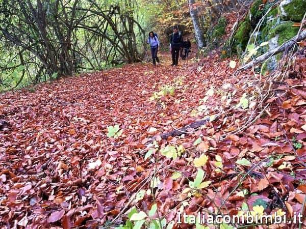 foliage-sulla-passeggiata-del-sentiero-natura-di-Amandola