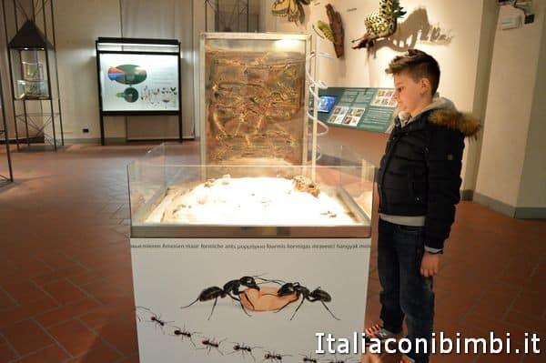 giochi educativi al museo di scienze naturali di Bergamo E. Caffi
