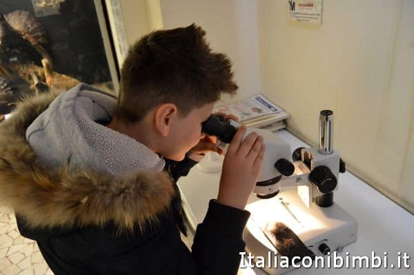 museo di scienze naturali di Bergamo