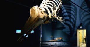 scheletro al museo di scienze naturali di Bergamo