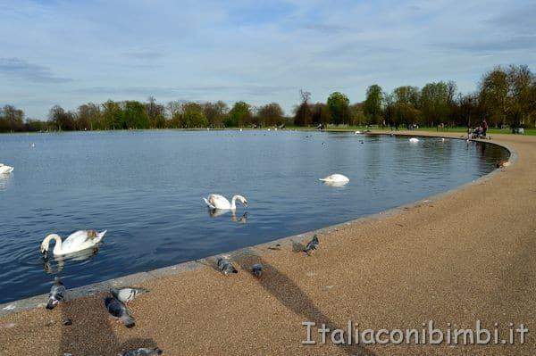 laghetto Kensington Gardens