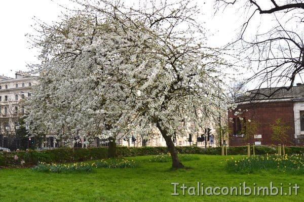 primavera a Regent's Park