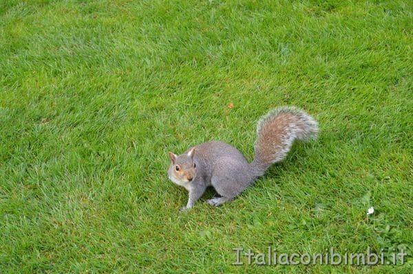 scoiattoli nei parchi di Londra