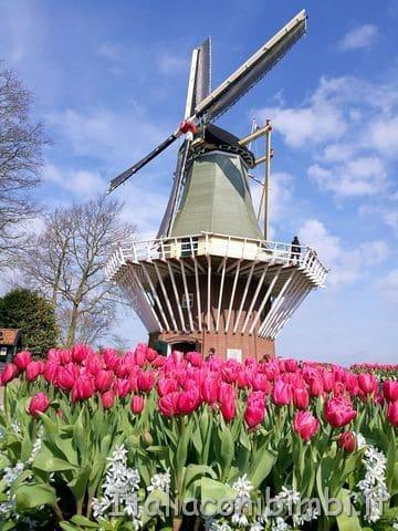 mulino-a-vento-del-Keukenhof-Olanda
