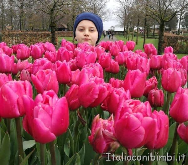 tulipani-rosa