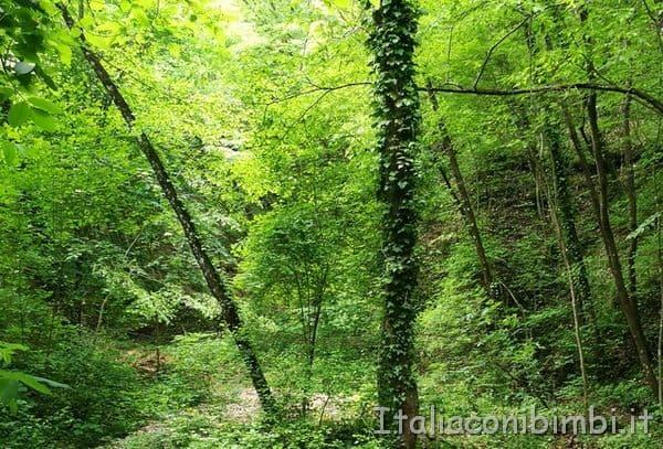 nel bosco di Urbania
