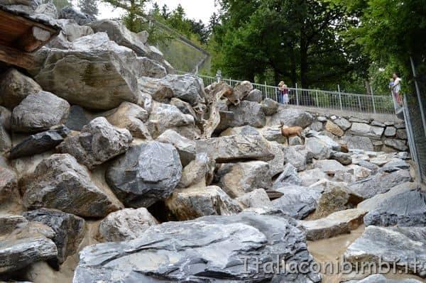 Alpenzoo Innsbruck stambecchi