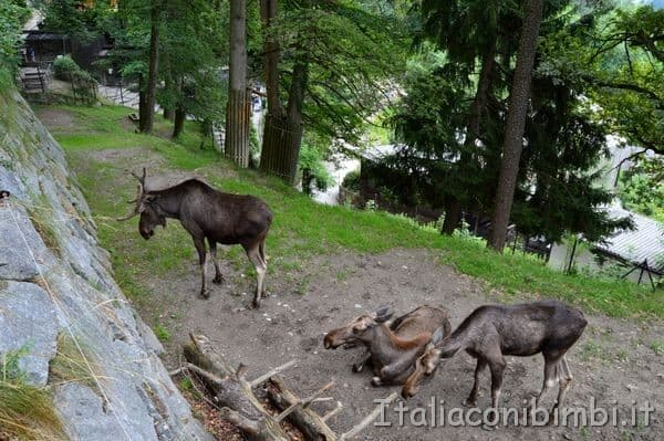 Alpenzoo a Innsbruck