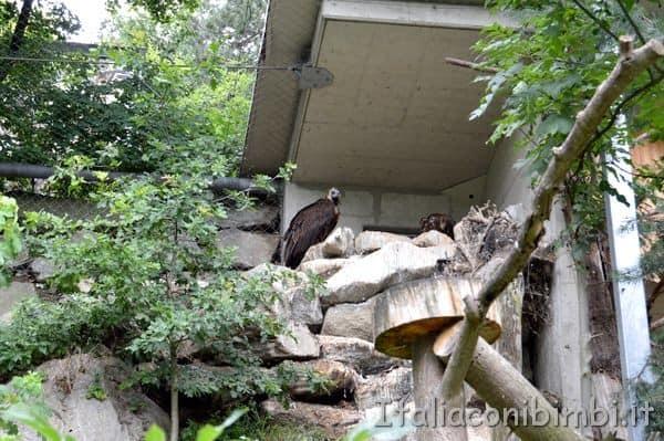 Zoo di Innsbruck rapaci