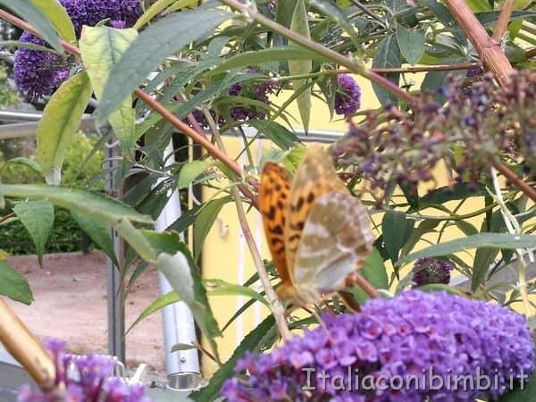 farfalle vicino all'ingresso del giardino