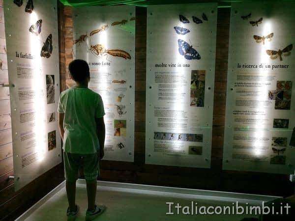 Giardino-delle-farfalle-di-Cessapalombo-museo
