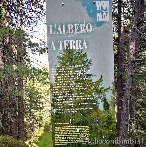 Pannelli sul Sentiero della Foresta dal Ciampedie a Gardeccia