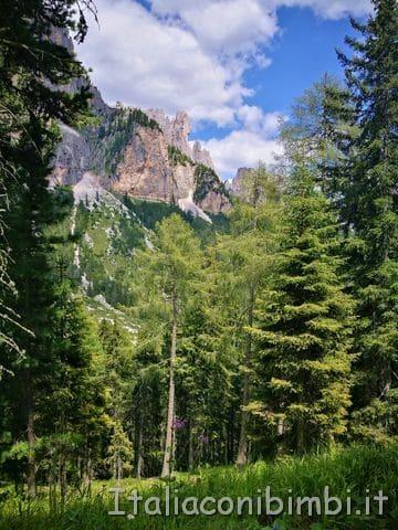 bosco al Ciampedie