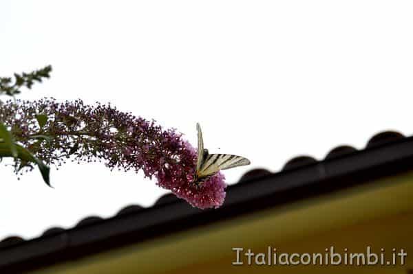 farfalle al Giardino delle farfalle di Cessapalombo