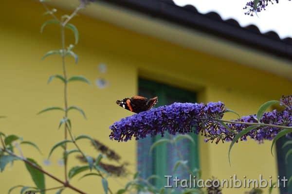 farfalle nel Giardino delle farfalle di Cessapalombo