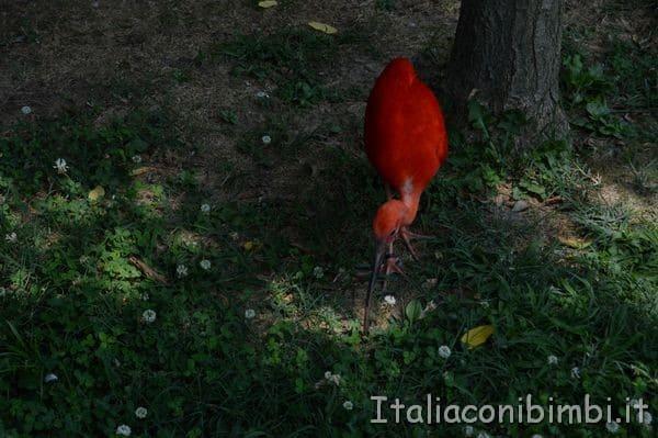 fenicottero rosso al parco zoo Punta Verde di Lignano
