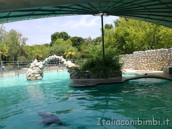 foche-al-parco-zoo-Punta-Verde-di-Lignano