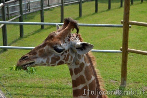 giraffa allo zoo Punta Verde di Lignano