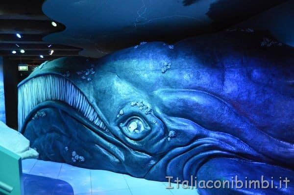 la storia della balena museo navale di Amsterdam