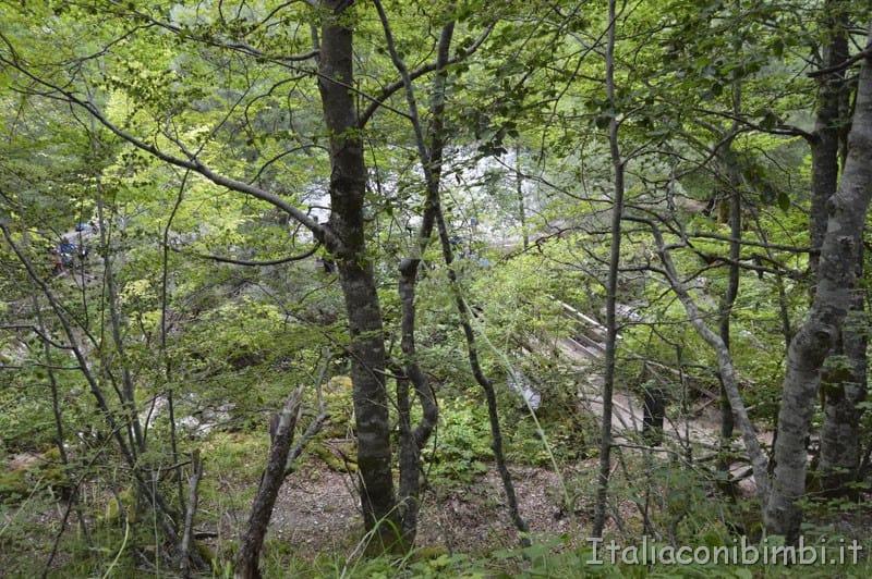 Camosciara - sentiero delle Ninfe