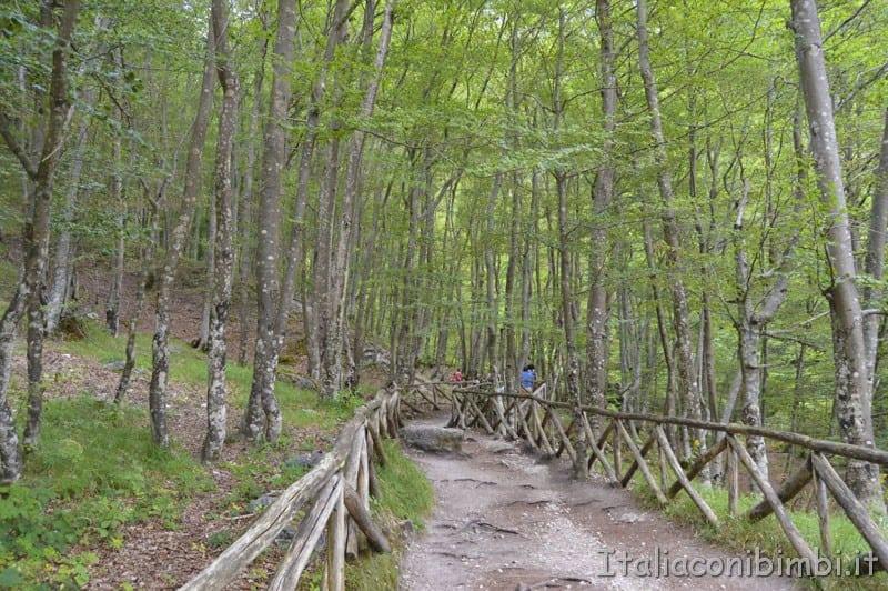 Camosciara - sentiero per la cascata