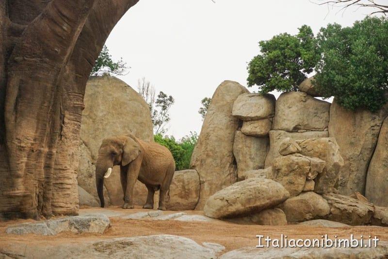 Bioparco di Valencia- elefante