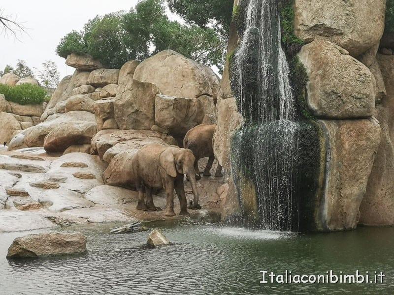Bioparco-di-Valencia-elefanti-alla-cascata