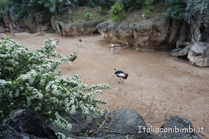 Bioparco-di-Valencia-gazzelle-e-struzzi