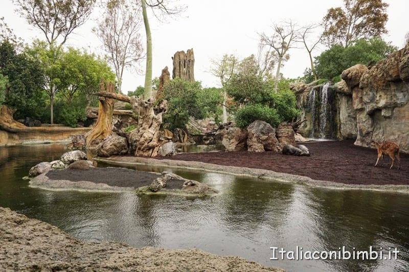 Bioparco di Valencia- ippopotami fossato