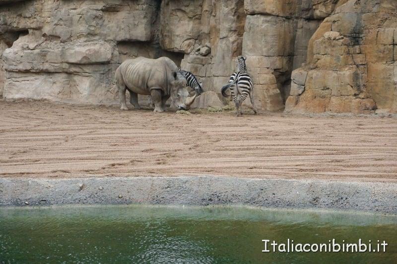 Bioparco di Valencia- zebre e rinoceronti
