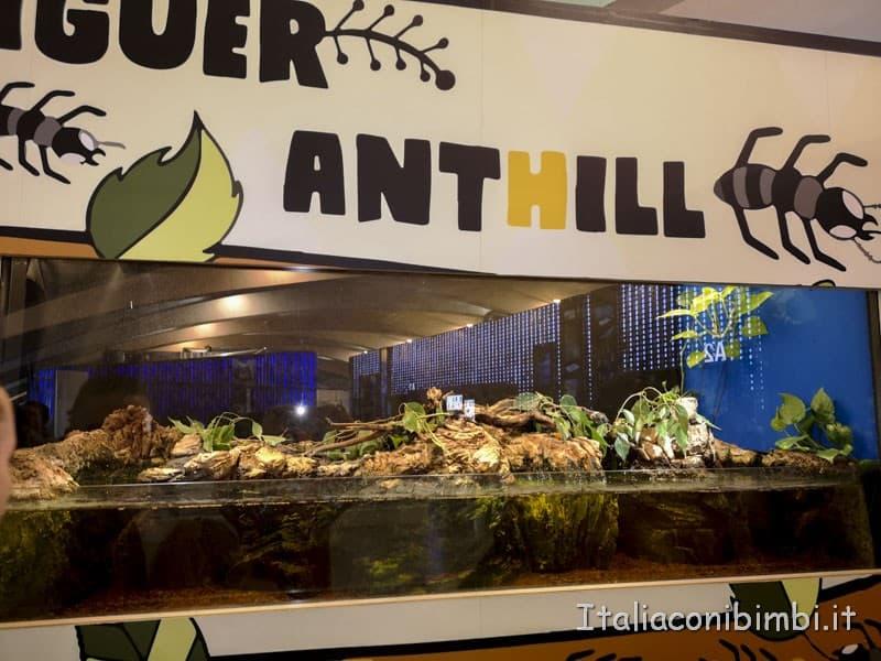 Museo-delle-scienze-di-Valencia-formiche