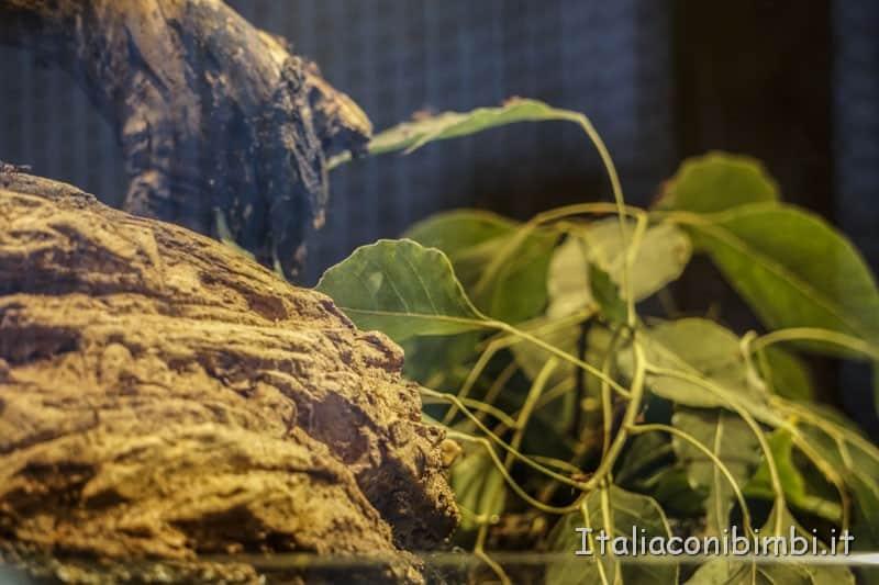 Museo delle scienze di Valencia- formiche