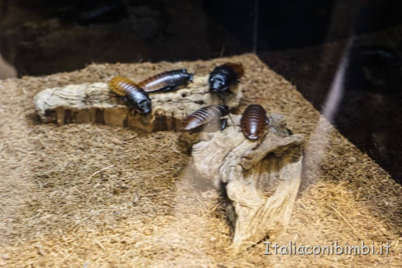 Museo delle scienze di Valencia- insetti