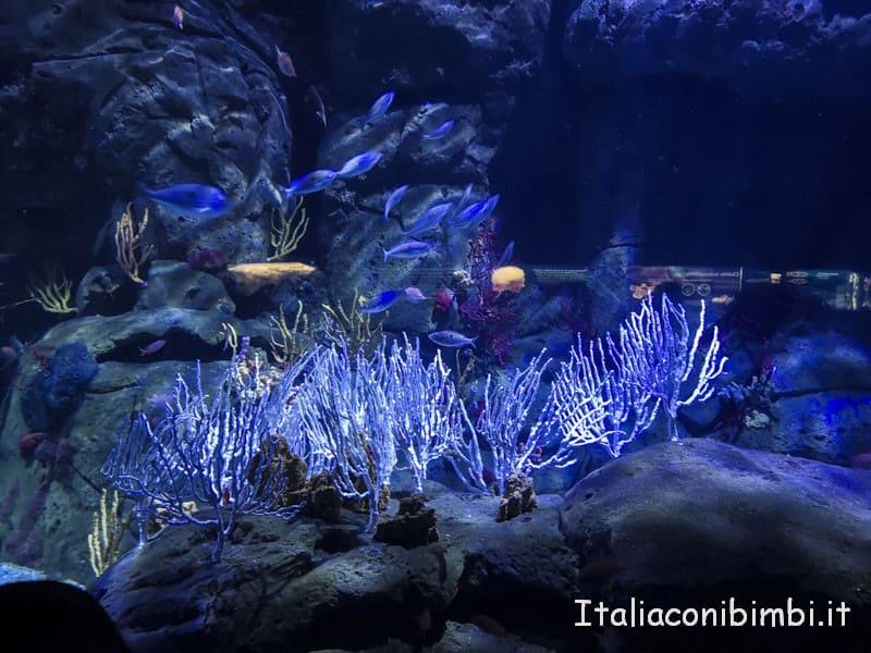 Oceanografico di Valencia - coralli blu