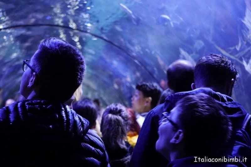 Oceanografico di Valencia - galleria con gli squali