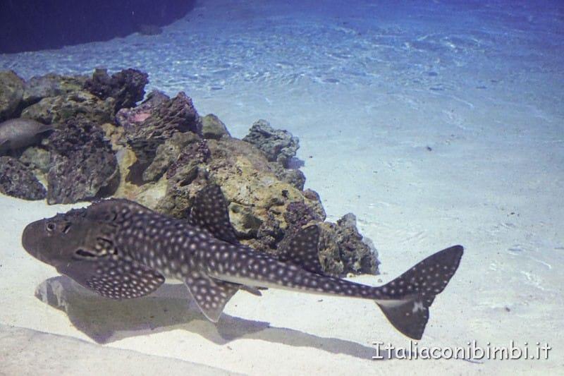 Oceanografico di Valencia - pesce maculato