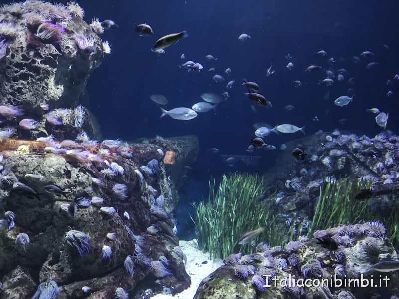 Oceanografico-di-Valencia-pesci-tropicali