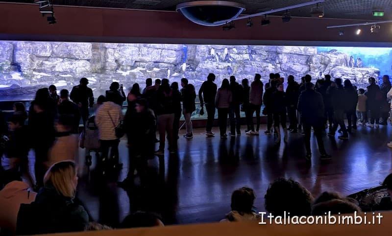 Oceanografico di Valencia - sala grande con i pinguini